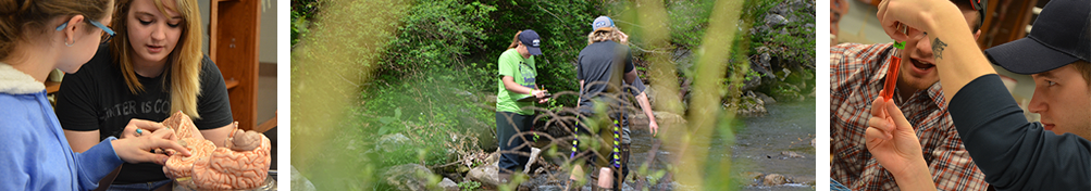 Students and faculty studying biology in the field in and in the lab