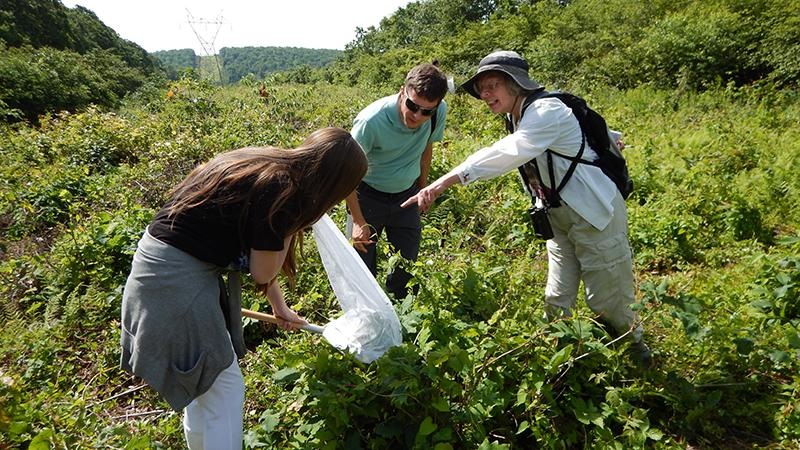 Dr. Gabriel Karns, visiting assistant professor at Ohio State University, and writer and naturalist Marcia Bonta watch Elanor Bonta collect a bee.