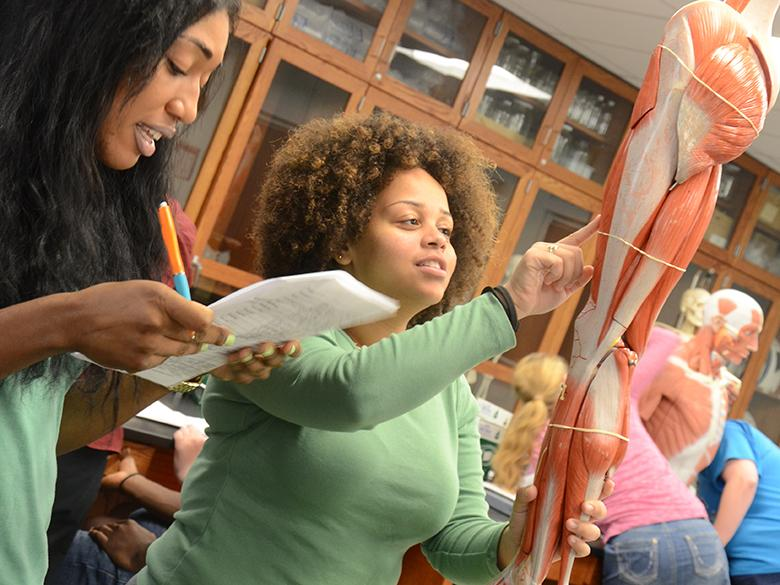 Students learning about human anatomy in a biology lab