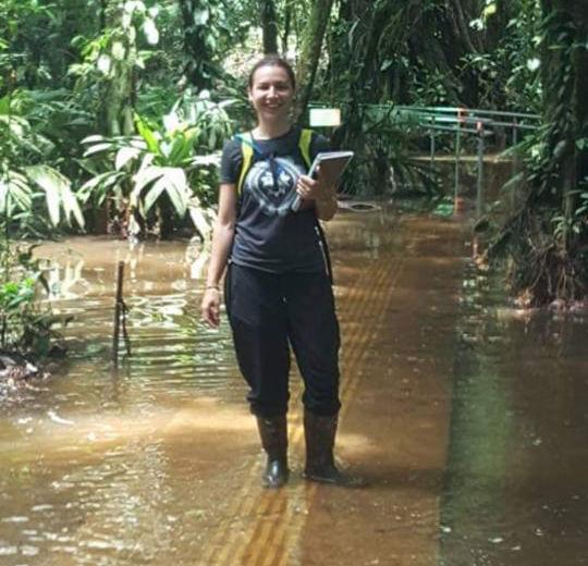 Spagnoli mergând în zonele umede din La Selva din Costa Rica
