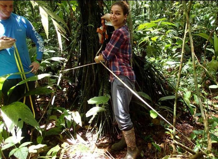 Spagnoli caută o unitate de răsaduri în sistemele radiculare ale palmelor de rădăcină din La Selva, Costa Rica