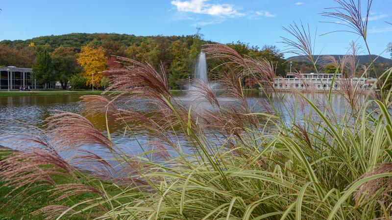 Wind blowing over the reflection pond