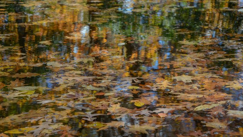 Leaves on the reflection pond