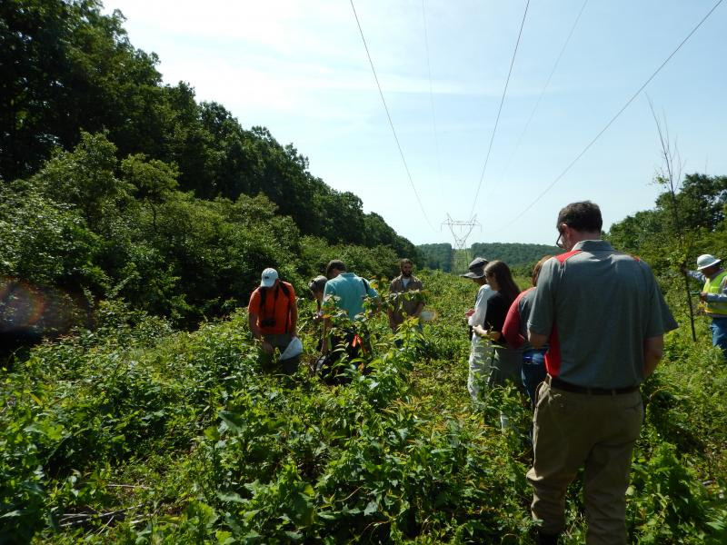 Researchers and funders spread out to check on vegetation treatment success.
