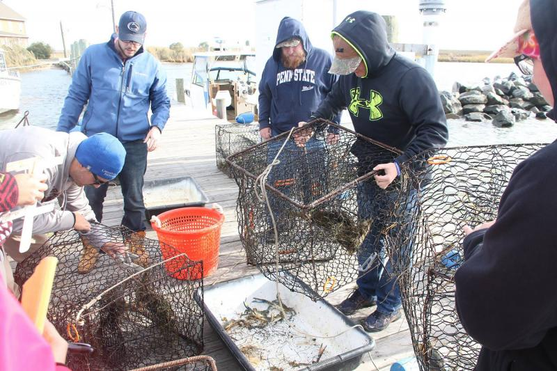 Penn State Altoona students examining crabs caught in traps