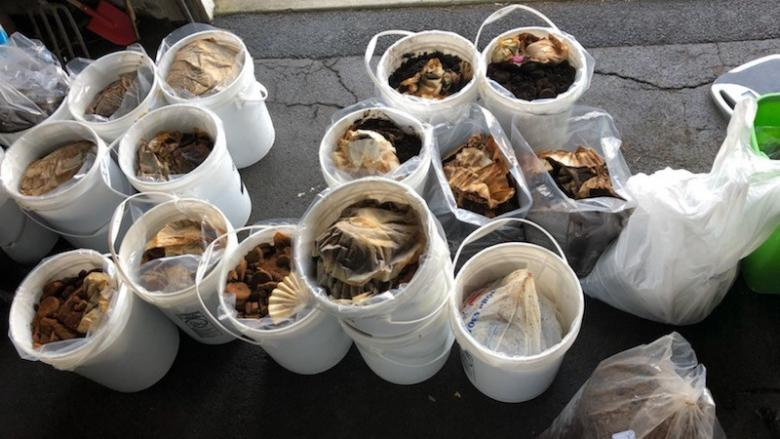 One week's worth of collected coffee grounds